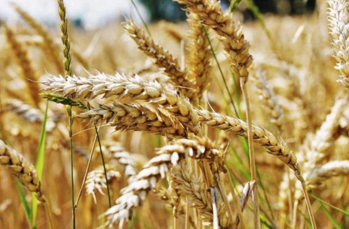 Европейские агрономы против запрета продажи земли иностранцам